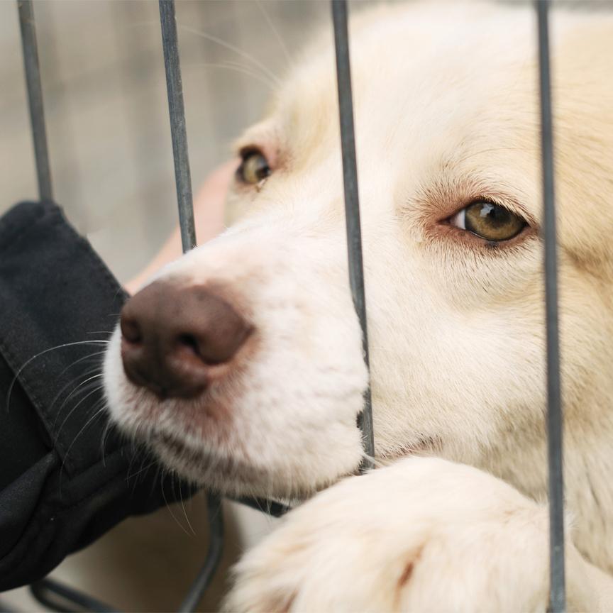 Make dog beds for shelters