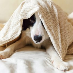 Make dog blankets to donate
