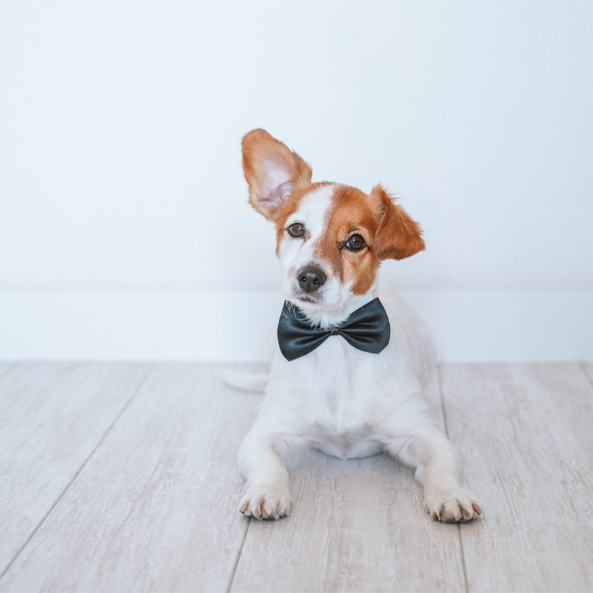 Make Bows for Shelter Dogs